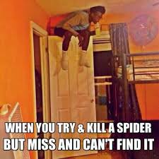 Funny Spiders Memes Of 2017 - when you try and kill a spider