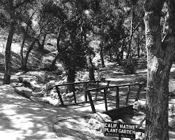 california native plant garden design water native plants and southern california u0027s long history of