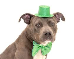 9 adoptable dogs hoping to be lucky this st patrick u0027s day