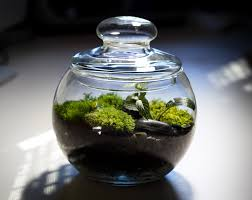 how to make your own terrarium inhabitat green design