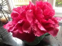 Caterpillar Vase Tiptoe Through The Tulips U2026 Rhubarb U0026 Raspberries