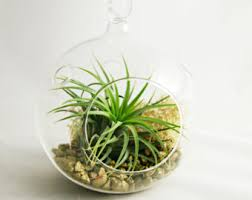 air plants planters terrariums by seaandasters on etsy