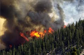 Colorado Wildfire Training Academy by Humans Are Responsible For The Vast Majority Of Wildfires In The