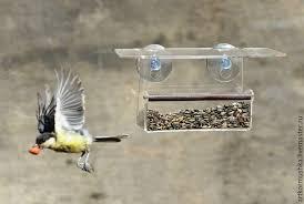 buy bird feeders on suction cups