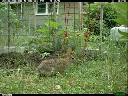 welcome wildlife to your sustainable yard emammal