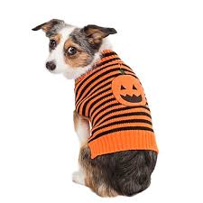 pet sweaters fashion pet lookin striped pumpkin sweater sweaters