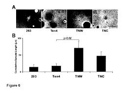 patent ep2241323a1 tenascin w and brain cancers google patentsuche