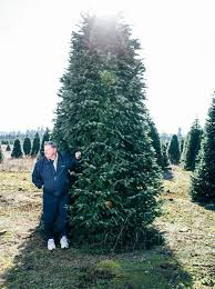 your christmas tree has lived through one hell of an adventure
