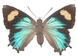 6 butterflies you might see this living