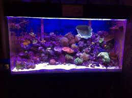 Reef Aquarium Lighting Going For T5 Led Best Combo Reef2reef Saltwater And Reef