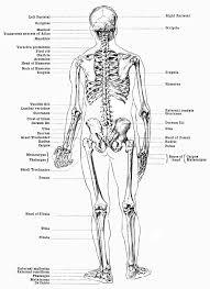 human skeletal system labeled diagram human anatomy chart