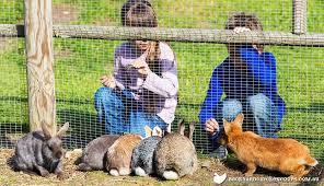 rabbit garden how to rabbit proof your garden