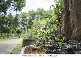 bonsai rock stock images royalty free images u0026 vectors shutterstock