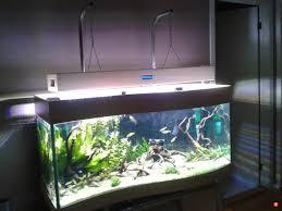 native aquarium plants aquatic plant central