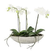 white orchids buy a by amara white orchids in an oval pot 3 stems amara
