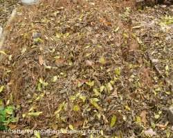 different types of mulch for the vegetable gardens