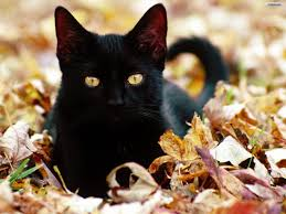 black cat halloween wallpaper black cat halloween wallpaper
