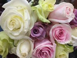 different color roses the color of a the meaning of different colors