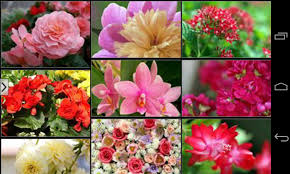 Beautiful Flowers Image Beautiful Flowers Wallpapers Android Apps On Google Play