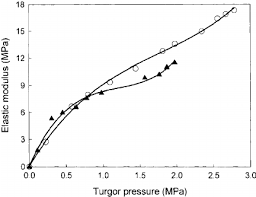 bulk elastic relationship between the bulk elastic modulus and turgor potential