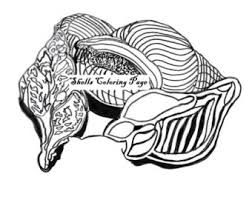 shell coloring pages etsy