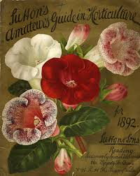 flower seed packets vintage packaging flower seed packets from the 1800s the