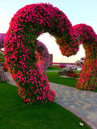 242 best beautiful flowers images on pinterest most beautiful