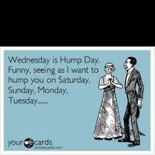 Hump Day Meme Dirty - that s what i m screaming interesting stuff pinterest humor