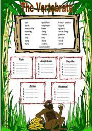 english teaching worksheets vertebrates
