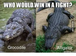 Crocodile Meme - who wouldwinin a fight alligator crocodile memefulcom alligator