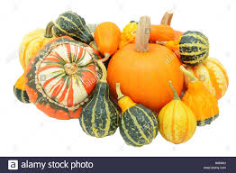 of autumnal gourds pumpkins turks turban squash and mixed