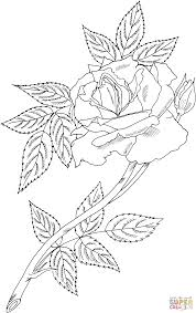 royal sunset climbing rose coloring page free printable coloring