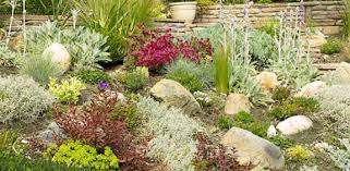 Drought Friendly Landscaping by Ideas For Drought Tolerant Landscaping