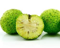 what are hedge apples good for thriftyfun