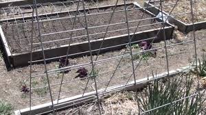 trellis and mini greenhouse in one cattle panels in the garden