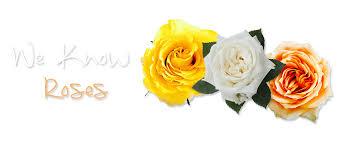 bulk flowers online fmi farms wholesale flowers online flowers in bulk