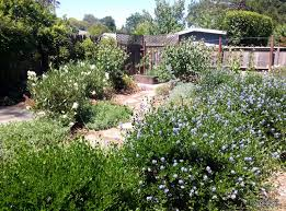 edible landscapes take many forms edible landscaping made easy