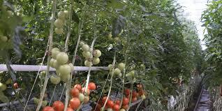chambre d agriculture agen agen la chambre d agriculture propose un food dating sud