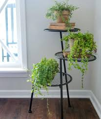 Indoor Plants That Don T Need Sunlight by Plants Of Season 4 Joanna Gaines Shares Her Fixer Upper Secret