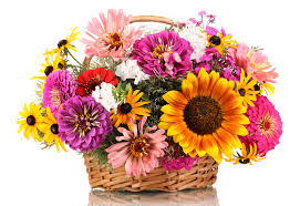 day flowers 44 best most beautiful mothers day flowers for s