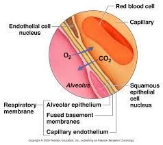 respiratory a u0026p