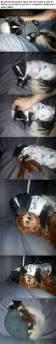 141 best skunks images on pinterest baby skunks animals and