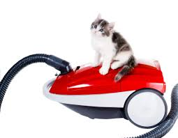 best small vacuum the best vacuums for pet hair j u0026r carpet cleaning