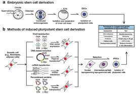 100 embryonic stem cell protocols vol 2 differentiation models