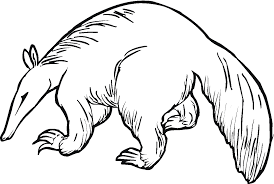 alligator coloring pages anteater coloring page giant anteater coloring page free printable