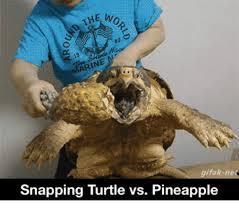 Turtle Memes - 25 best memes about sea turtle animated sea turtle animated