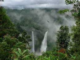 native plants in the tropical rainforest apes amazon rainforest on emaze