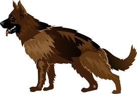 australian shepherd illustration australian shepherd free vector download 99 free vector for