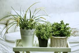 adorable good plants that filter air home similiar good plants
