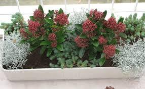 herbstbepflanzung balkon herbst balkon pflanzen artownit for